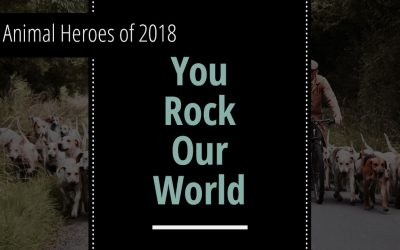Animal Heroes of 2018 : You Rock our World!