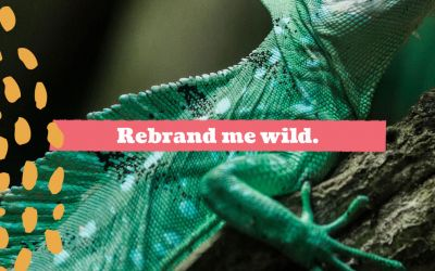 Rebrand me wild. The story of a brand who needed help.